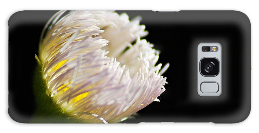 Fleabane Galaxy S8 Case featuring the photograph The Light Within by Larry Ricker