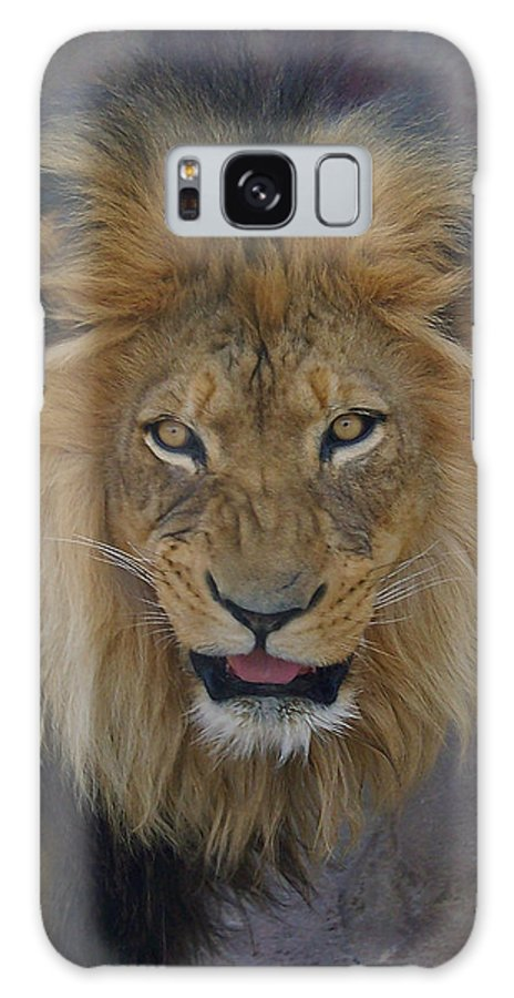 Lion Galaxy S8 Case featuring the photograph The Lion Dry Brushed by Ernie Echols