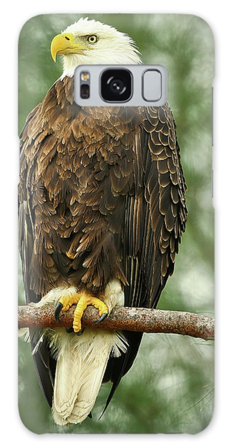Bald Eagle Galaxy S8 Case featuring the photograph The Majestic by Dennis Goodman