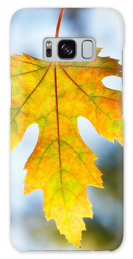Maple Galaxy S8 Case featuring the photograph The Maple Leaf by Marilyn Hunt