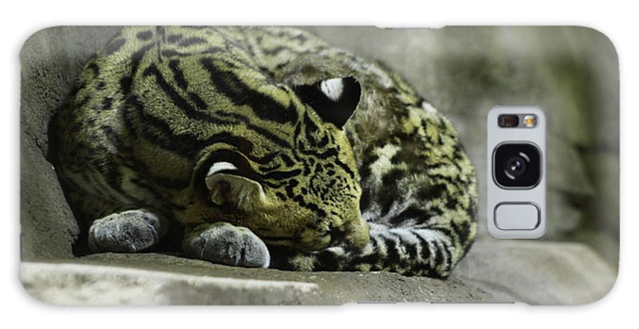 Cat Galaxy S8 Case featuring the photograph The Napping Rock by Laddie Halupa