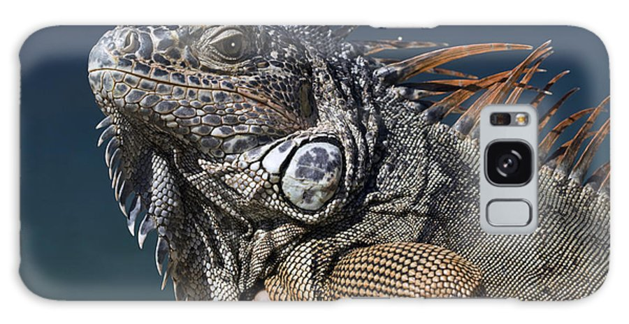 Animal Galaxy S8 Case featuring the photograph The Night Of The Iguana by Carl Purcell