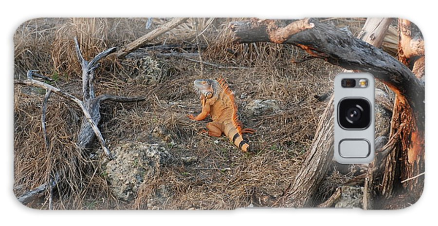 Branches Galaxy S8 Case featuring the photograph The Orange Iguana by Rob Hans