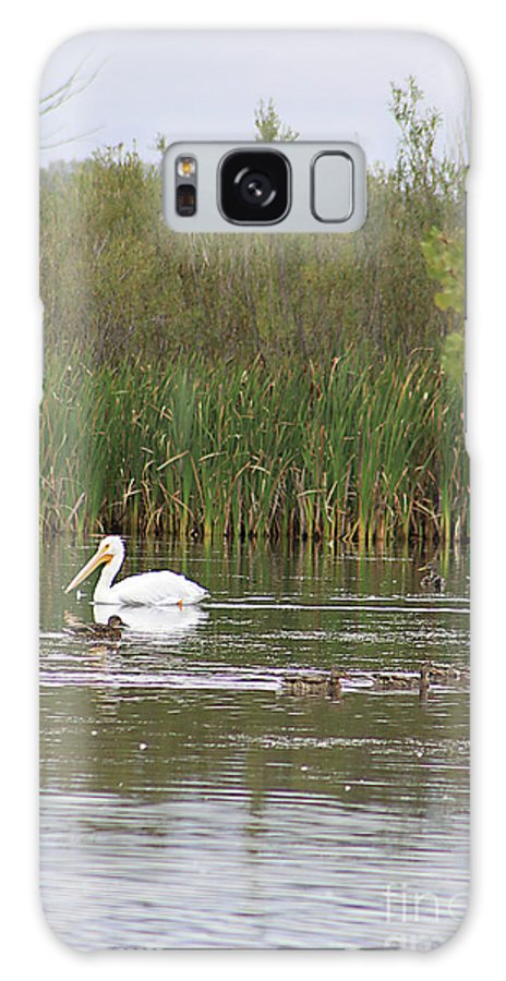 Pelican Galaxy S8 Case featuring the photograph The Pelican And The Ducklings by Alyce Taylor