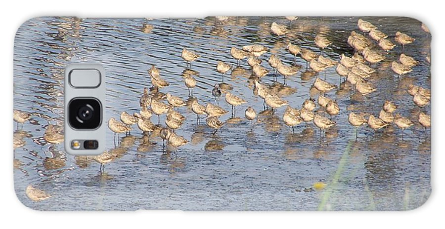 Seabirds Galaxy S8 Case featuring the photograph The Plovers by Laurie Kidd