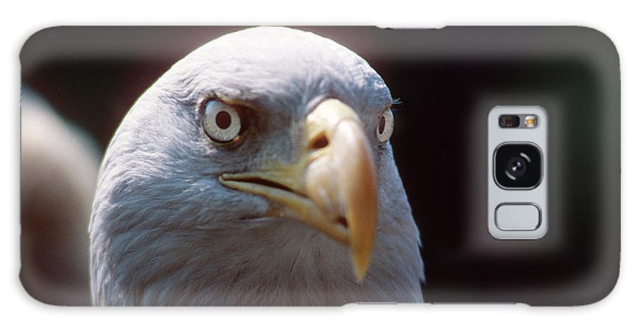 Bald Eagle Galaxy S8 Case featuring the photograph The Price Of Freedom by Carl Purcell