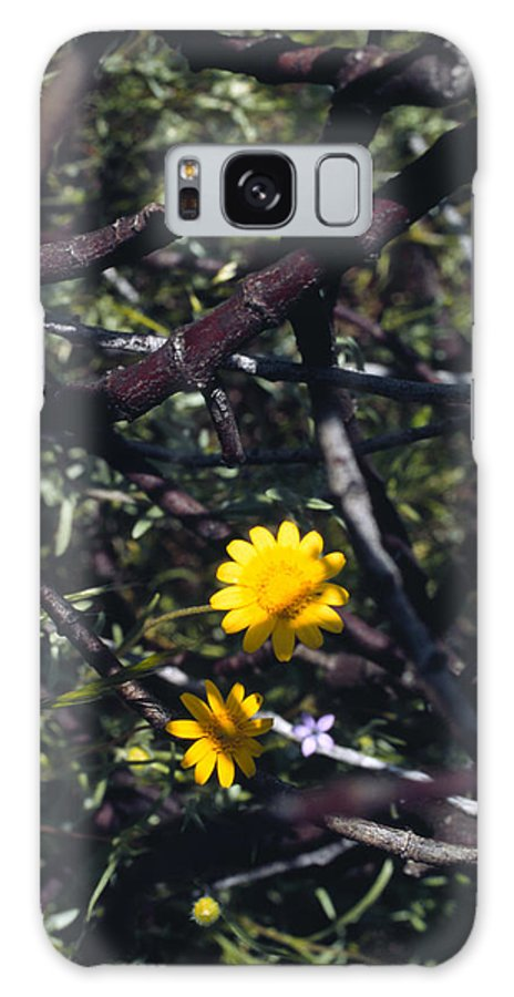 Flower Galaxy S8 Case featuring the photograph The Prisoner by Randy Oberg