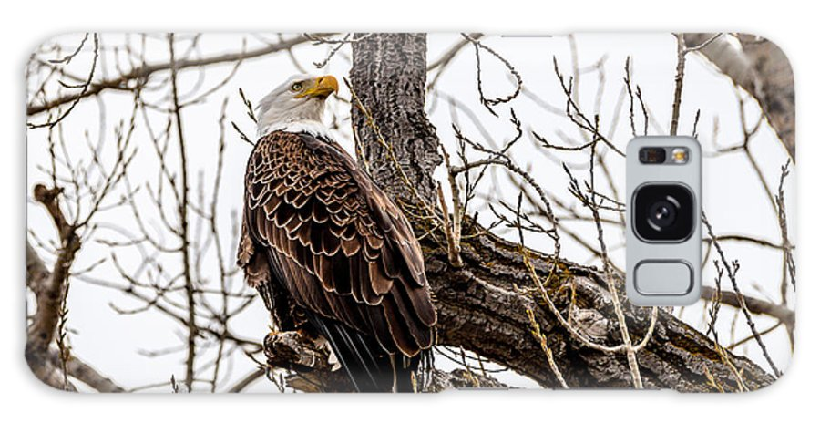 Bald Eagle Galaxy S8 Case featuring the photograph The Protector by Yeates Photography