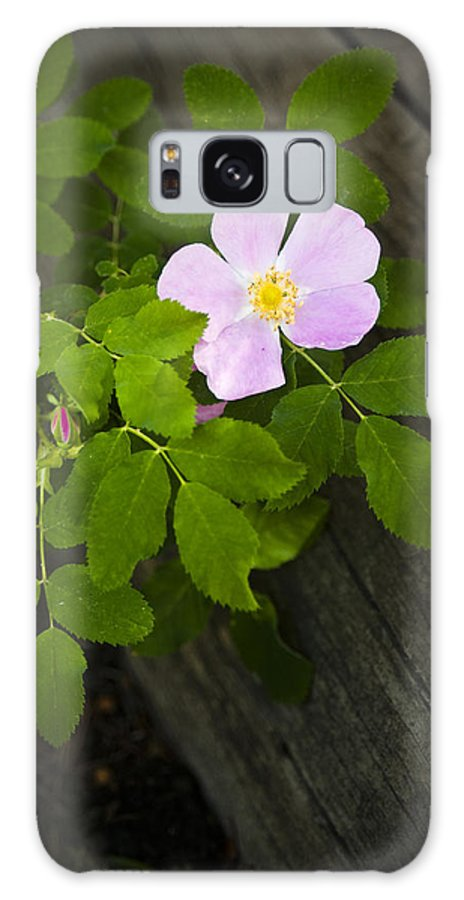 Flower Galaxy S8 Case featuring the photograph The Purple Flower by Chad Davis