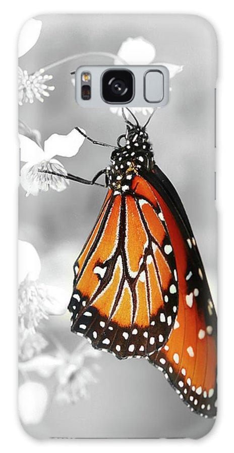 Butterflies Galaxy S8 Case featuring the photograph The Queen by Dennis Goodman