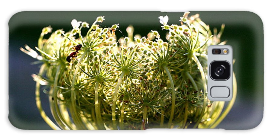 Queen Anne's Lace Galaxy S8 Case featuring the photograph The Queen by Diane Merkle