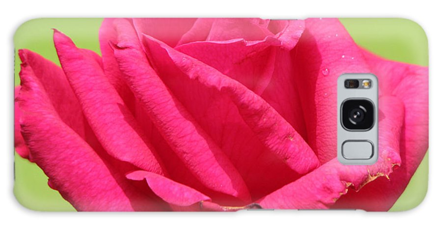 Roses Galaxy S8 Case featuring the photograph The Rose by Amanda Barcon