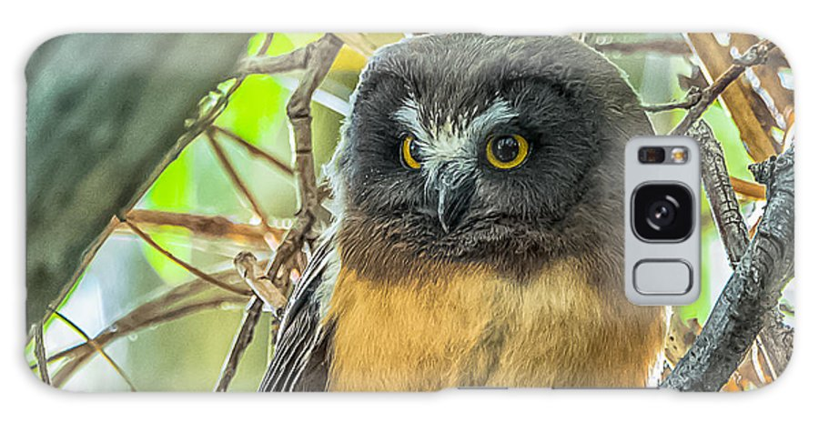 Owlet Galaxy S8 Case featuring the photograph The Savvy Saw-whet by Yeates Photography