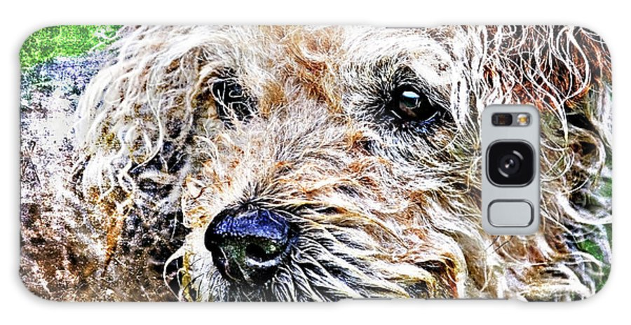 Dog Galaxy S8 Case featuring the photograph The Scruffiest Dog In The World by Meirion Matthias