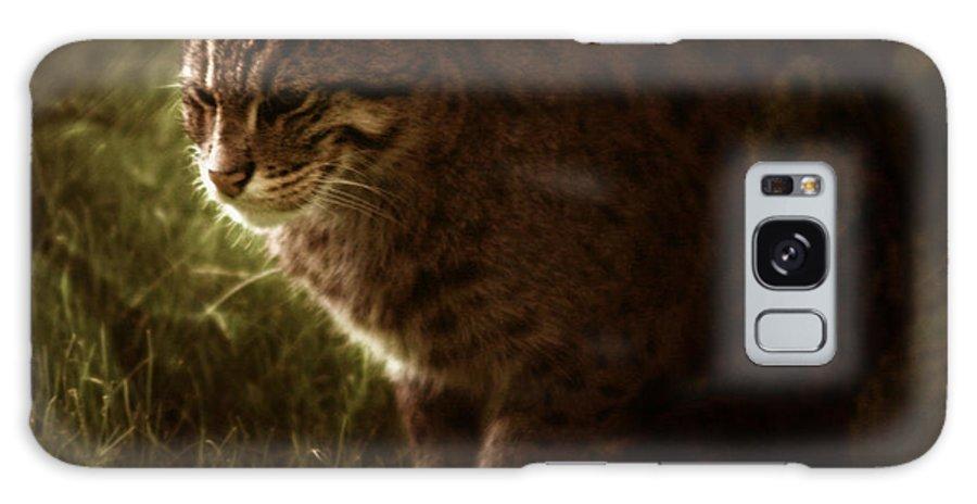 Sleepy Galaxy S8 Case featuring the photograph The Sleepy Wild Cat by Angel Ciesniarska