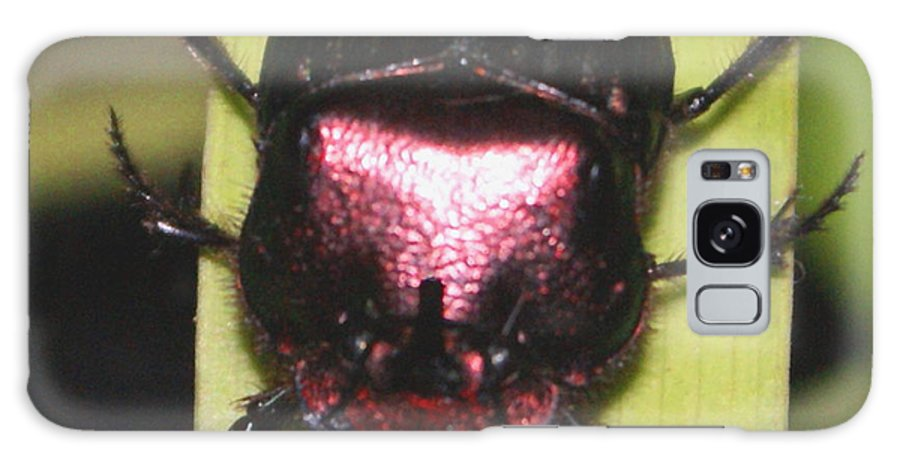 Beetle Galaxy S8 Case featuring the photograph The Smiling Beetle Bug-debbie-may by Debbie May