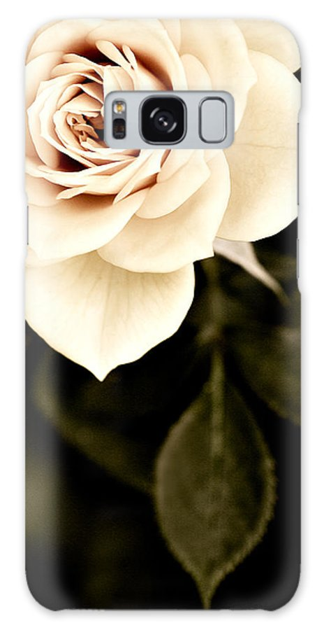 Rose Galaxy S8 Case featuring the photograph The Softest Rose by Marilyn Hunt