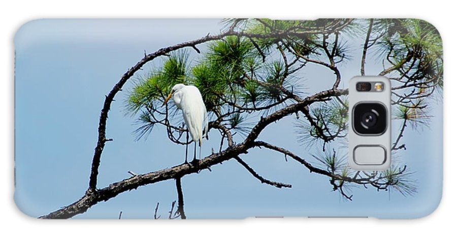 Bird Galaxy S8 Case featuring the photograph The Stoic Egret - Debbie May by Debbie May
