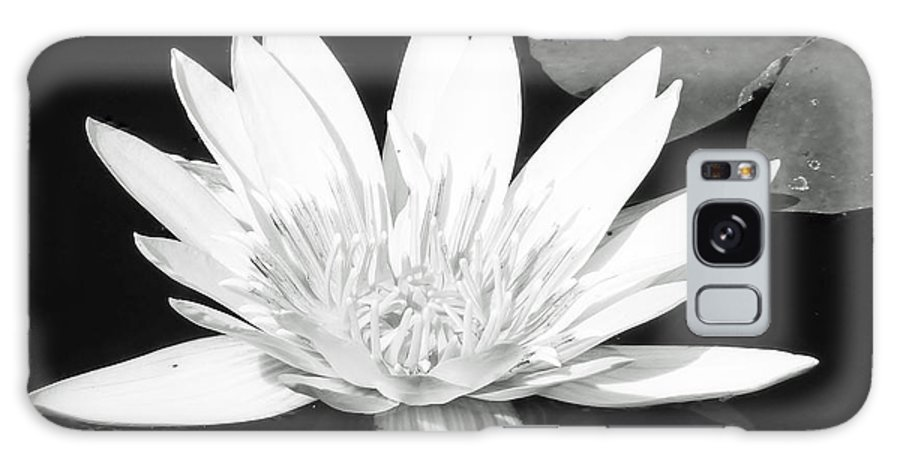 Water Lily Galaxy S8 Case featuring the photograph The Vintage Lily II by Melanie Moraga