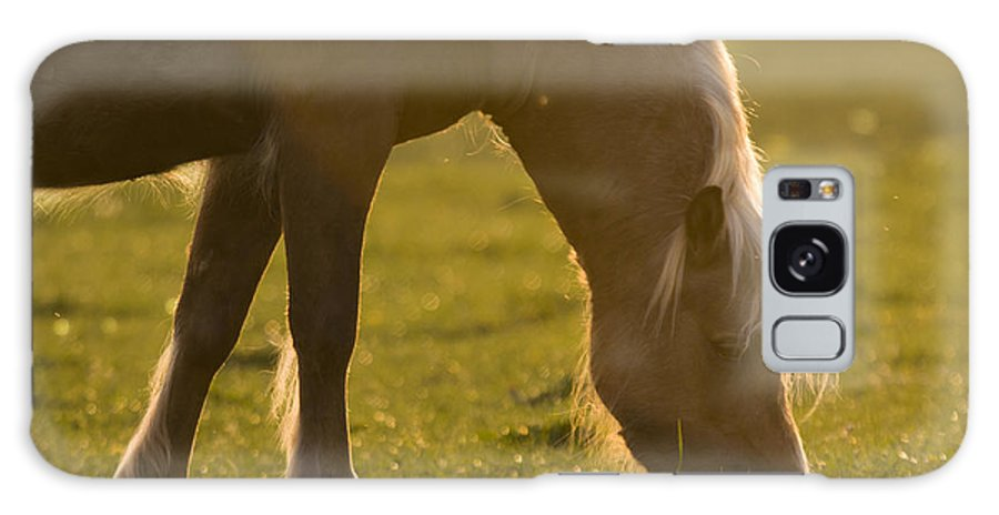 Horse Galaxy S8 Case featuring the photograph The Welsh Pony by Angel Ciesniarska
