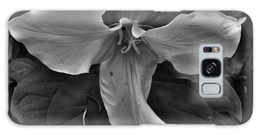 Flower Galaxy S8 Case featuring the photograph The Open Trillium Bw by Charles Lucas