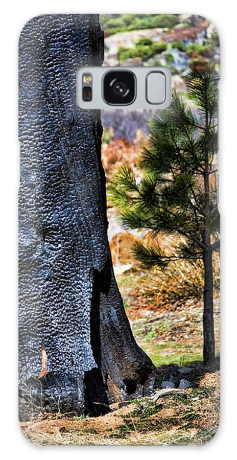 Forest Fire Galaxy S8 Case featuring the photograph Then And Now by Bonnie Bruno