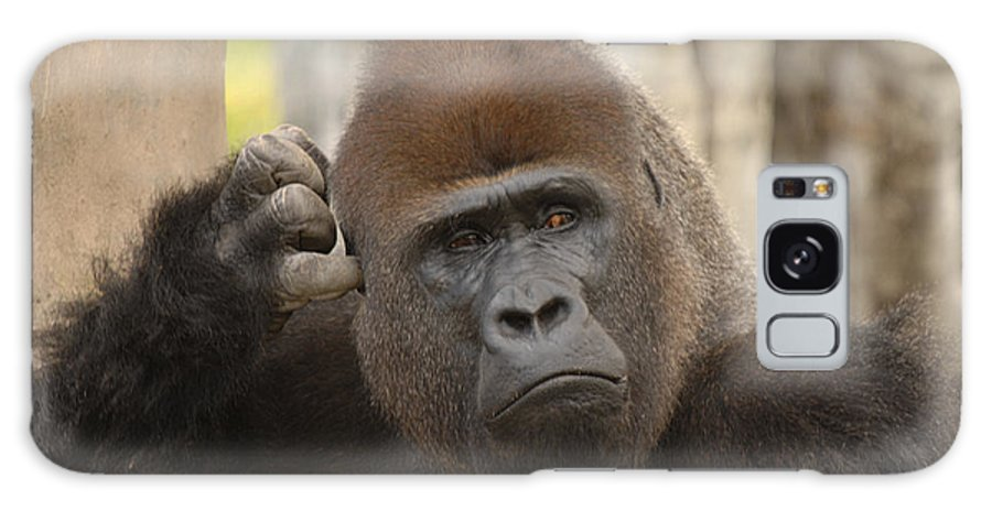Gorilla Galaxy S8 Case featuring the photograph Think About It by Keith Lovejoy