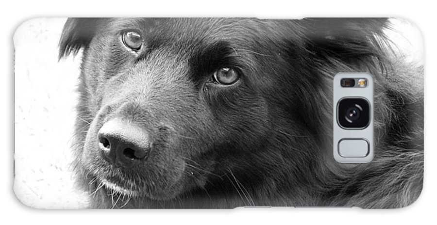 Dog Galaxy Case featuring the photograph Thinking by Amanda Barcon