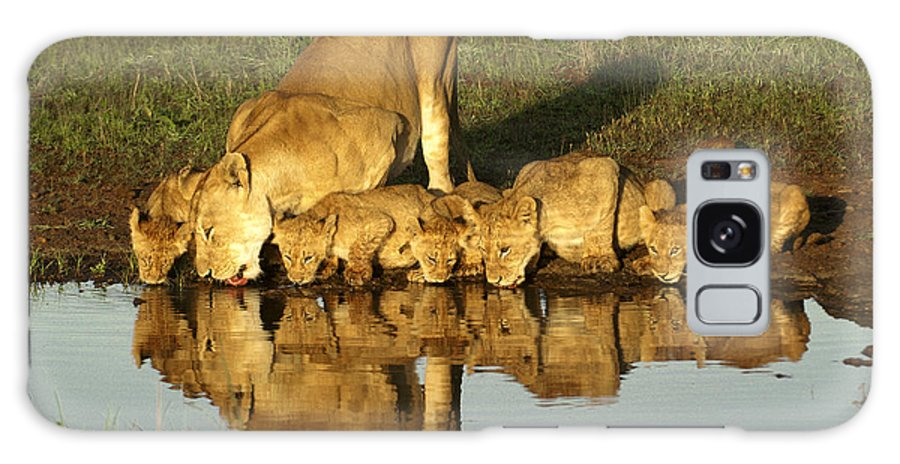 Lion Galaxy S8 Case featuring the photograph Thirsty Lions by Michele Burgess