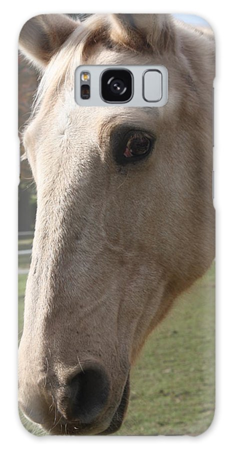 Horse Galaxy S8 Case featuring the photograph This Is My Good Side by Erin Rosenblum