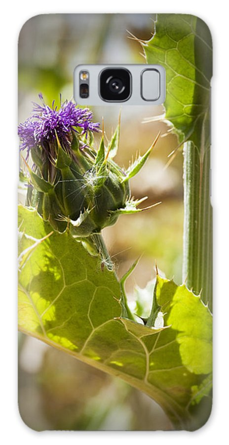 Thistle Galaxy S8 Case featuring the photograph Thistle 2 by Kelley King