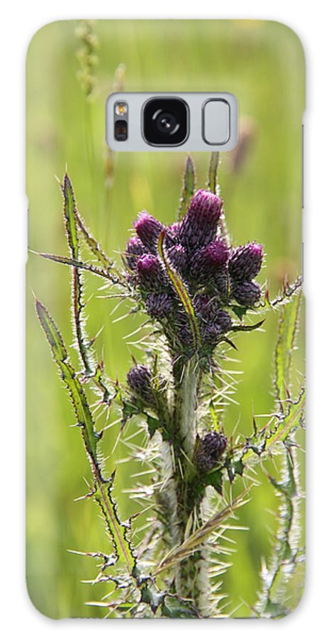 Flowers Galaxy S8 Case featuring the photograph Thistle Do by Martina Fagan