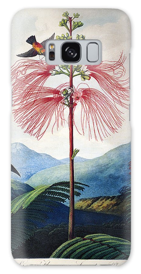 1799 Galaxy S8 Case featuring the photograph Thornton: Sensitive Plant by Granger
