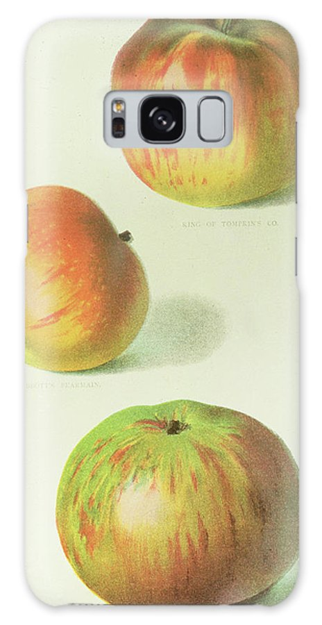 Apple Galaxy S8 Case featuring the painting Three Apples by English School