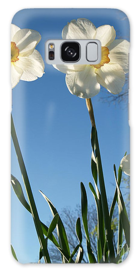 Flower Galaxy Case featuring the photograph Three Backlit Jonquils From Below by Anna Lisa Yoder