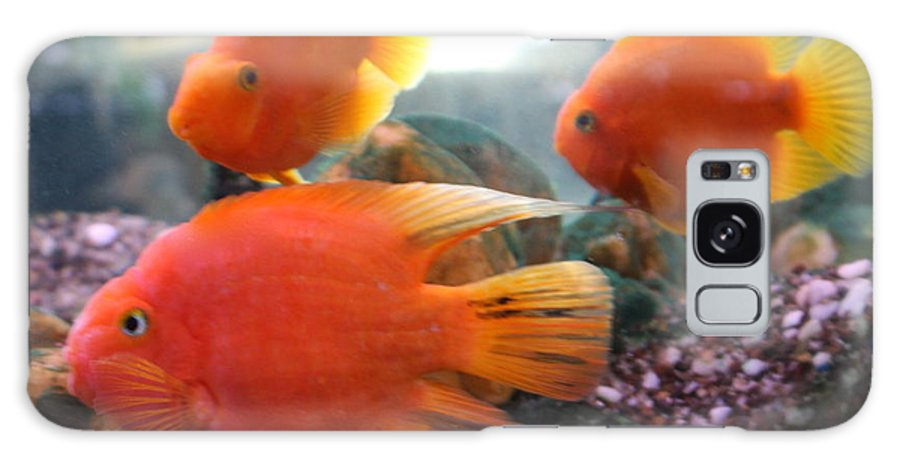 Orange Galaxy Case featuring the photograph Three Fish by Kenna Westerman