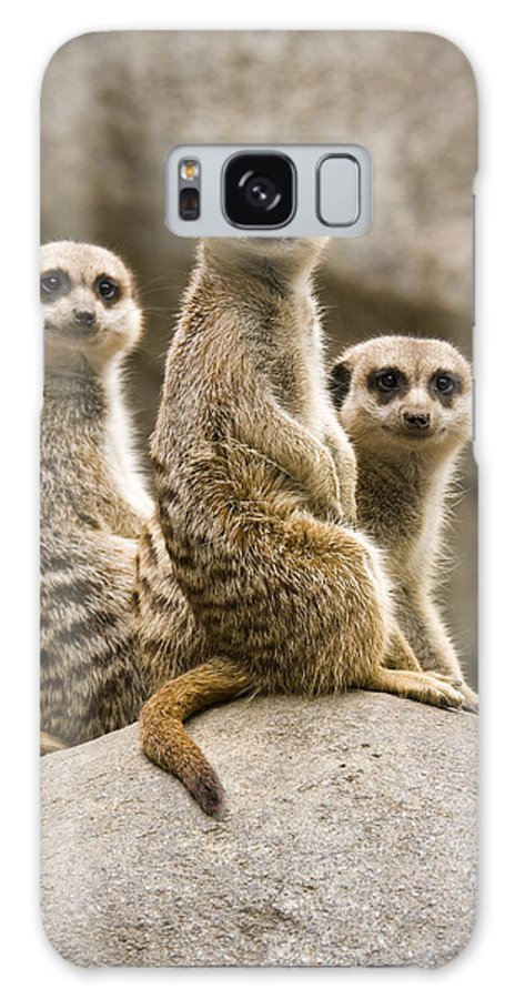 Chad Davis Galaxy S8 Case featuring the photograph Three Meerkats by Chad Davis