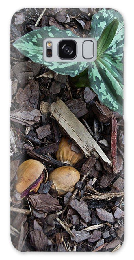 Trillium Galaxy S8 Case featuring the photograph Three Nuts For A Trillium by Douglas Barnett