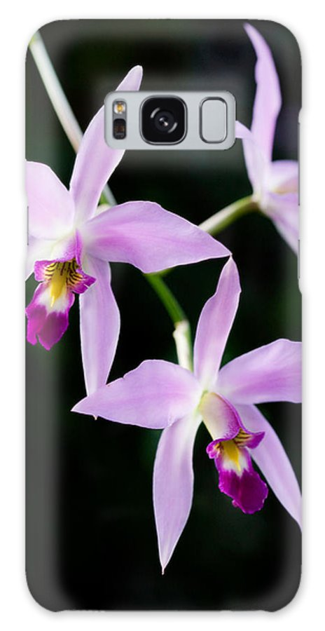 Orchid Galaxy S8 Case featuring the photograph Three Orchids by Marilyn Hunt