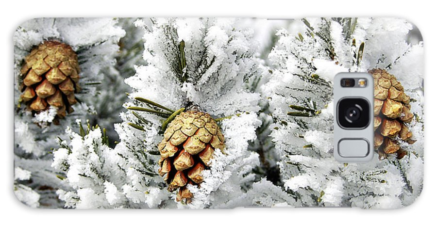 Frosty Galaxy S8 Case featuring the photograph Three Pinecones by Marilyn Hunt