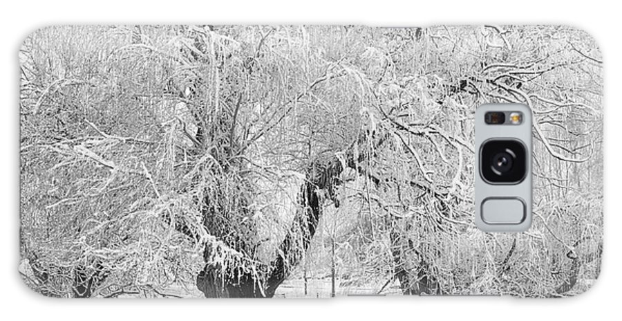 Black And White Galaxy S8 Case featuring the photograph Three Trees In The Snow - Bw Fine Art Photography Print by James BO Insogna