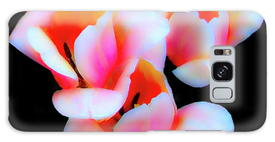 Tulip Galaxy S8 Case featuring the photograph Three Tulips by Frances Hattier