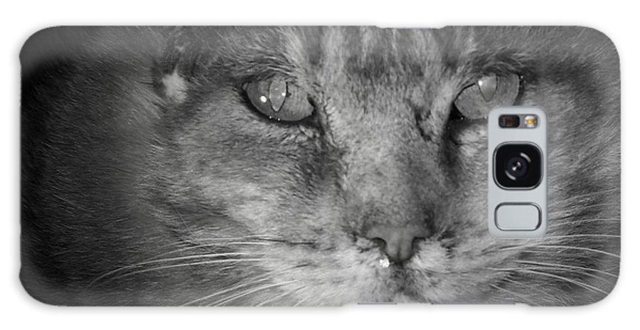 Cat Galaxy S8 Case featuring the photograph Thumbody In Black And White by Deborah Montana