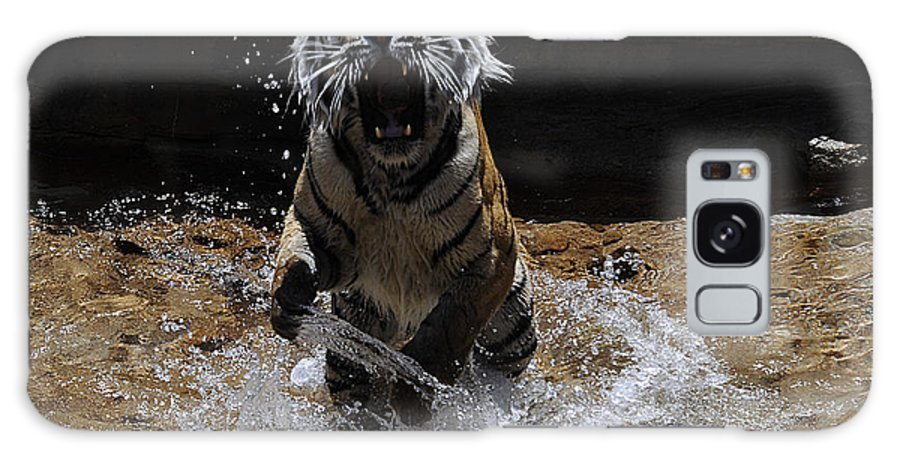 Tiger Galaxy S8 Case featuring the photograph Tiger 1 by Keith Lovejoy