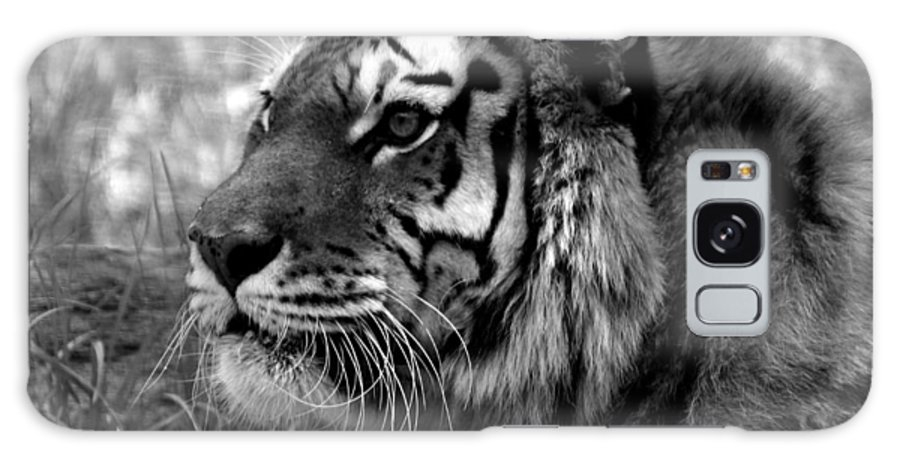 Tiger Galaxy S8 Case featuring the photograph Tiger by Steven Brown