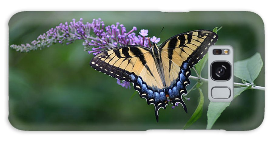 Tiger Swallowtail Butterfly Galaxy S8 Case featuring the photograph Tiger Swallowtail Female On Butterfly Bush Flowers by Robert E Alter Reflections of Infinity