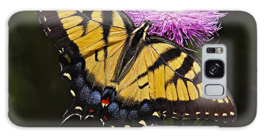 Butterfly Galaxy S8 Case featuring the photograph Tiger Swallowtail by William Jobes