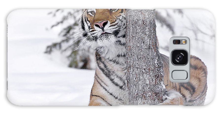 Tiger Galaxy S8 Case featuring the photograph Tiger Winter Wonderland by Athena Mckinzie
