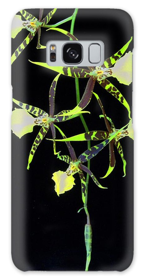 Orchid Galaxy S8 Case featuring the photograph Tigers by Laurie Paci