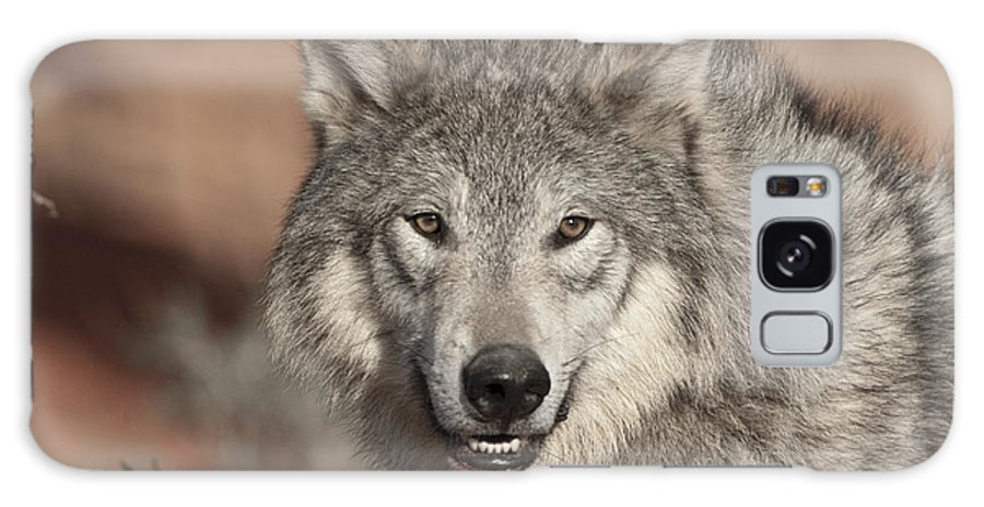 Wolves Galaxy S8 Case featuring the photograph Timber Wolf Portrait by Sandra Bronstein